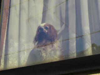 窓越しのジン