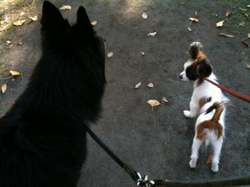 お散歩するキャンティとホッピー