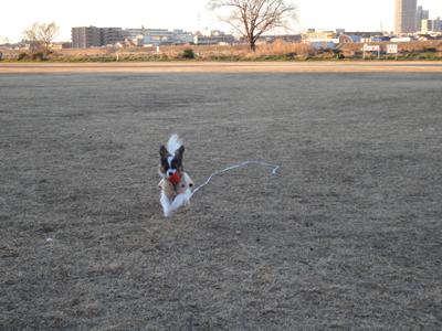 ノア@多摩川でボール遊び