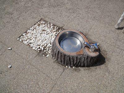 足柄SAドッグランの水飲み場