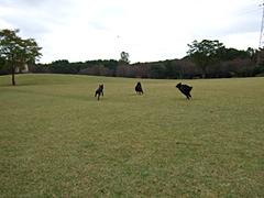 ボールを取りに行く黒犬たち