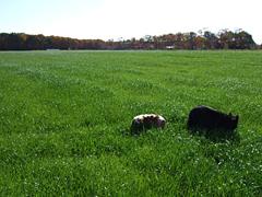 草を食むジンとキャンティ。ココはサラダバーじゃありません!