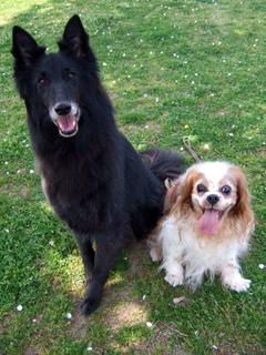 ジン(右)とキャンティ(左)