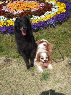 花壇の前で、ジン(右)とキャンティ(左)