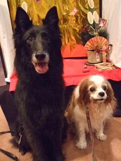 ジン(右)、キャンティ(左)