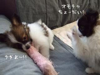 シャロンちゃん(右)とホッピー(左)