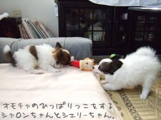 シャロンちゃん(左)とシェリーちゃん(右)