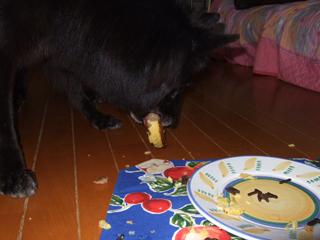 ケーキをバクバク食べるキャンティ4