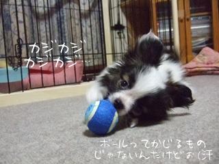 ホッピーのボール遊び