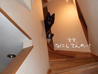 階段から見下ろすキャンティとホッピー