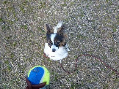 ボールに集中しているノア