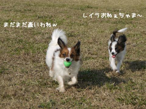 レイラちゃんとホッピー3