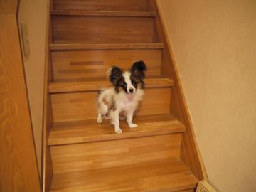 階段で固まるホッピー