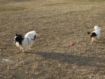 ちびちゃん(左)とレイラちゃん(右)