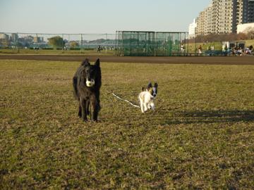 河川敷でボール遊び