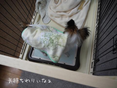 ホッピーと毛布