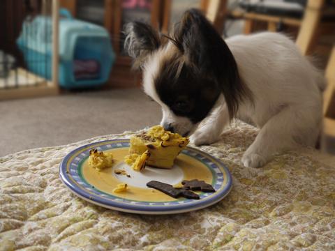 ケーキを食べるホッピー