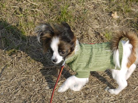 セーター姿のホッピー