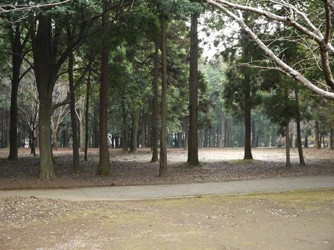 五本松公園内