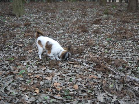 枯れ葉と遊ぶホッピー