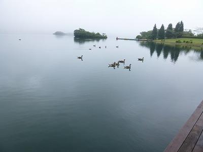 鴨@田貫湖