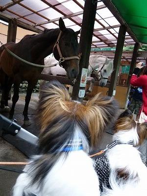 馬を見るホッピーとノア