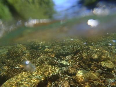 道志川水中
