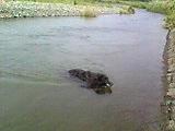 キャンティ@2008年初泳ぎ