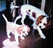 ジン(左)生後約1ヶ月その3