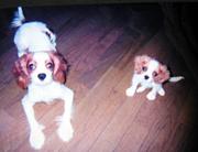 ジン(右)生後約1ヶ月その1