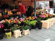 ミュンヘンのお花屋さん