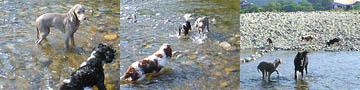 木津川で水遊び