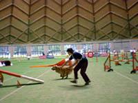 アジリティー競技会@長野県のやまびこドーム