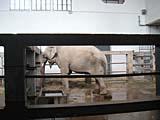 上海動物園の象
