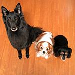 2006年ジン、モルト、キャンティ