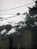 2006年1月大雪