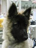 ターヴの子犬リサちゃん