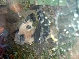 上海動物園のパンダ2