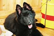 グローネンダールの子犬2