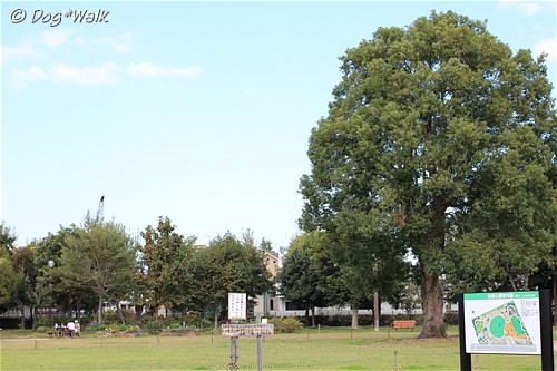 とんぼ池公園