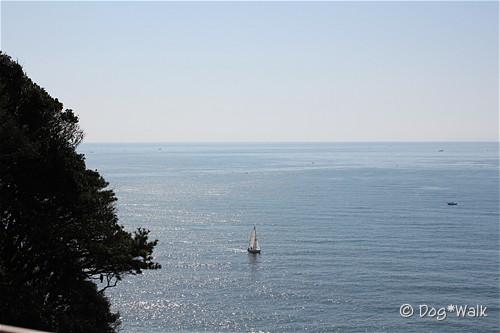 江の島から見た海
