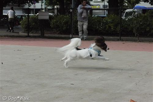 ノア@駒沢公園ドッグラン