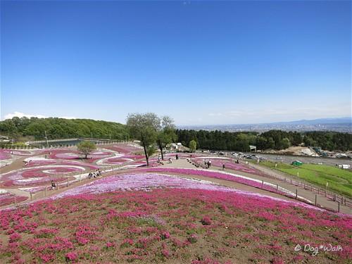 芝桜公園俯瞰