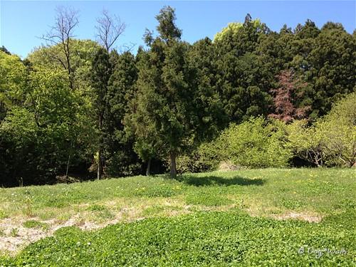 野草の生えている場所