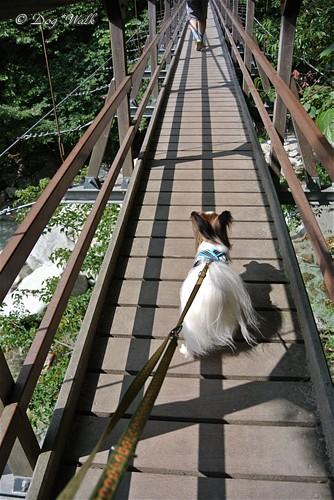 ノア@吊り橋