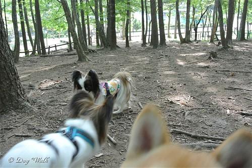 ホッピーとノアと柴犬ちゃん