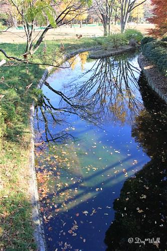 水に映る木々