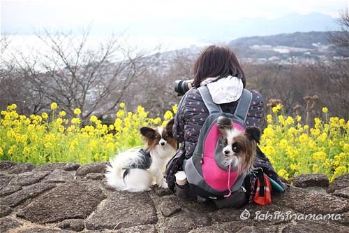 ヒトミ@お花撮影中