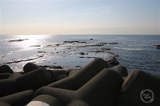 江の島の海