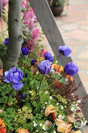 鎌倉の花壇